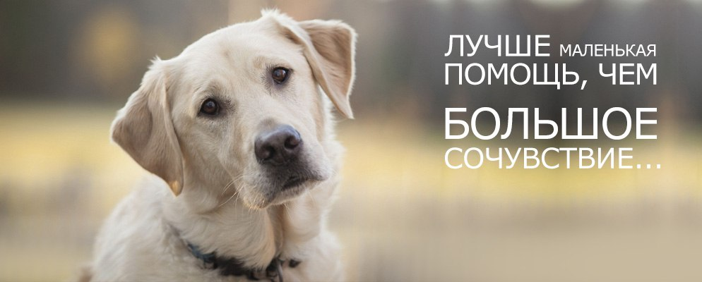 Займ Капитал помогает животным найти свой дом